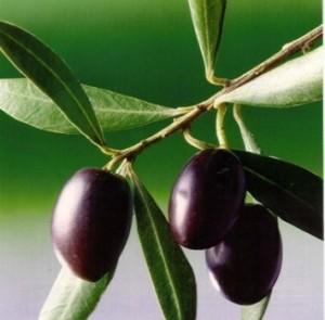 Campo de Montiel olive oil